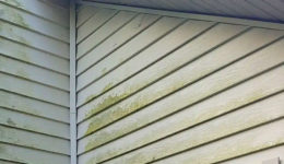 Algae on Vinyl Siding